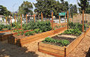 Glendale/ Community Garden - Picture This Land